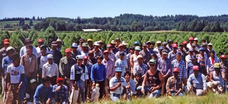 Holiday Tree Farms Chirstmas Tree Shearing Crew