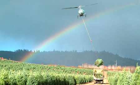 Holiday Tree Farms Helicopter Christmas Tree Harvesting