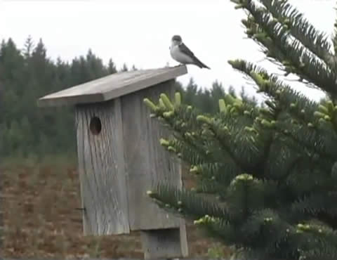 Environmental Stewardship - Birdhouses on Tree Farm